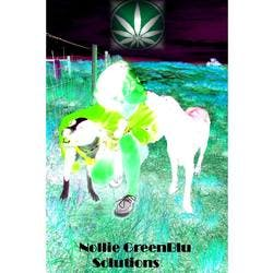 Nollie GreenBlu Solutions marijuana dispensary menu