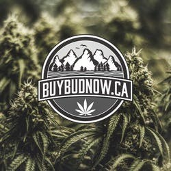Buy Bud Now marijuana dispensary menu