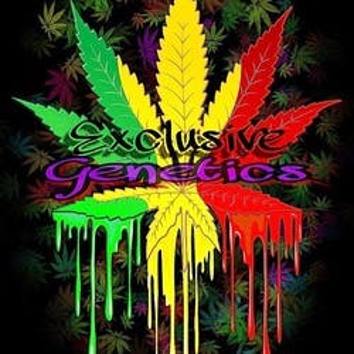 Exclusive Genetics marijuana dispensary menu