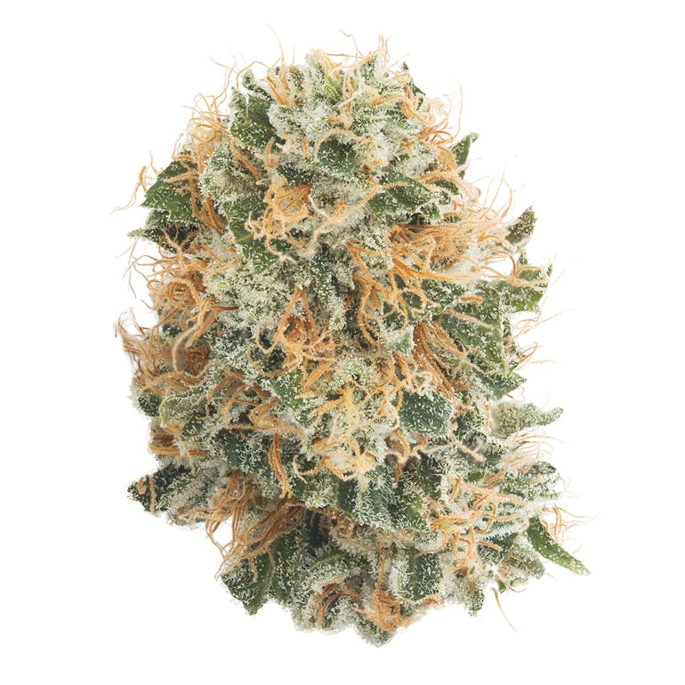 Bubble Gump | Product Image