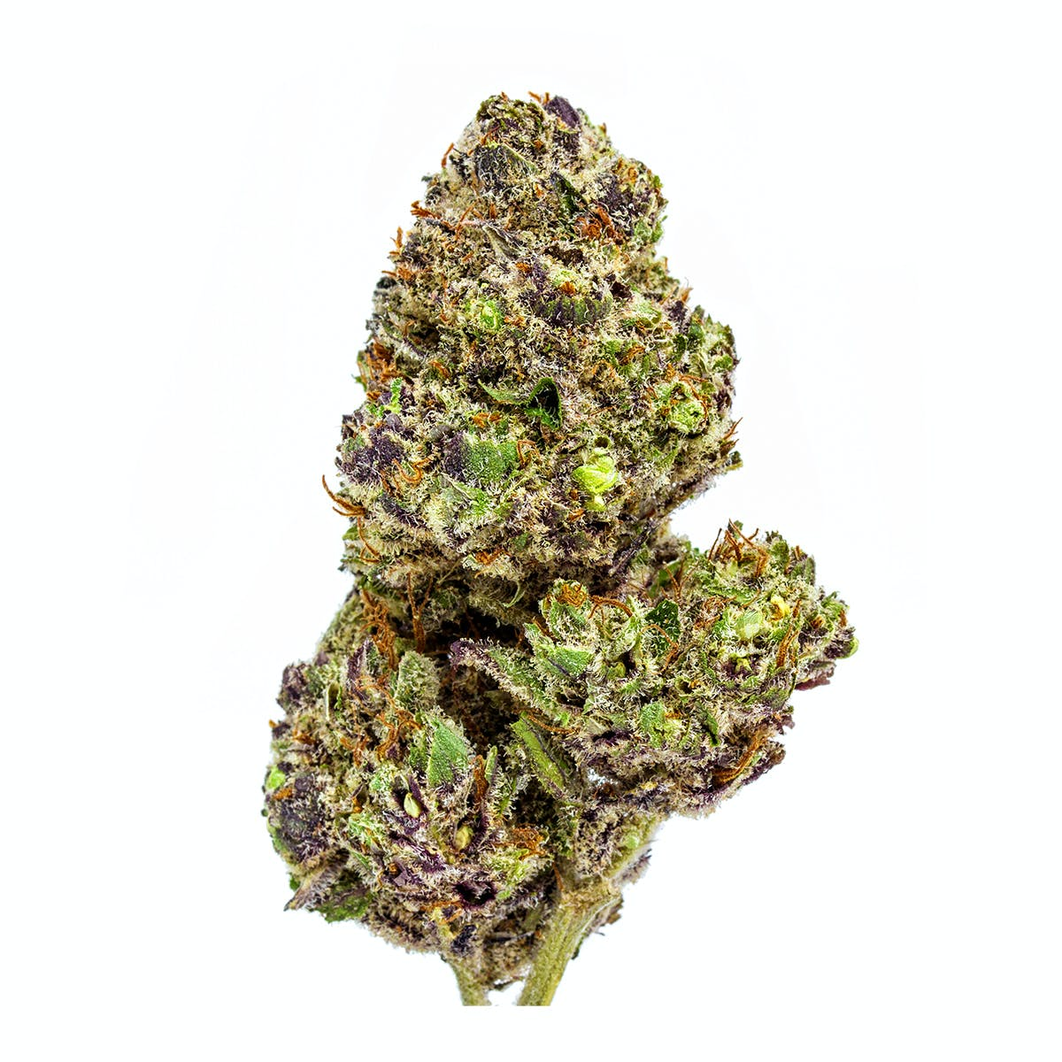 Revolutionary Clinics Purple Lamborghini Weedmaps