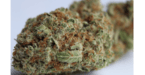 10358523 sour tangie