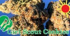 2326169_girl_scout_cookies