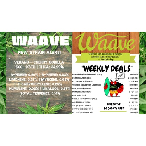 Waave (Now Open!) Daily Deal