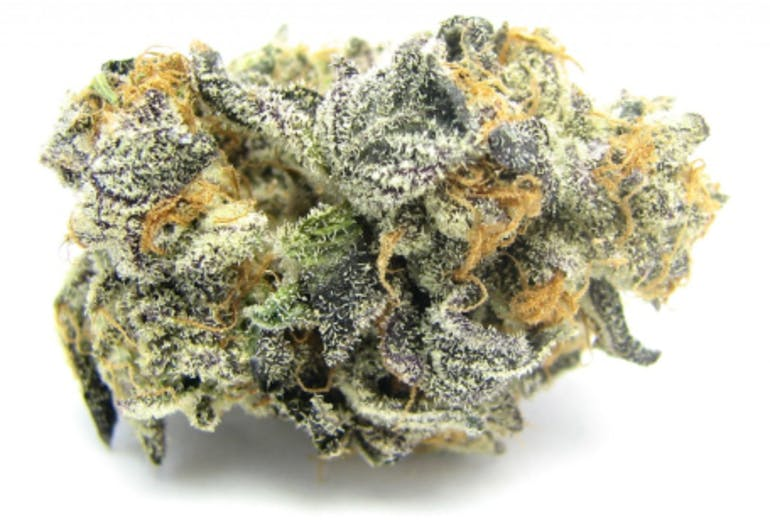 The City.Delivery Top Shelf Blue Cookies - 7g $60