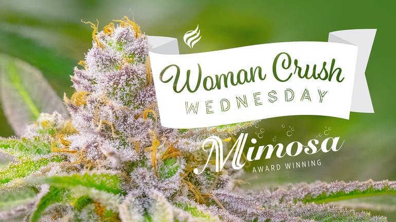 Great Northern Cannabis - Dimond 10% off WCW – Mimosa