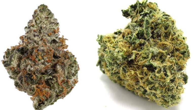 Calico Buds RX ANY TOP SHELF 1/2 OUNCE FOR $80
