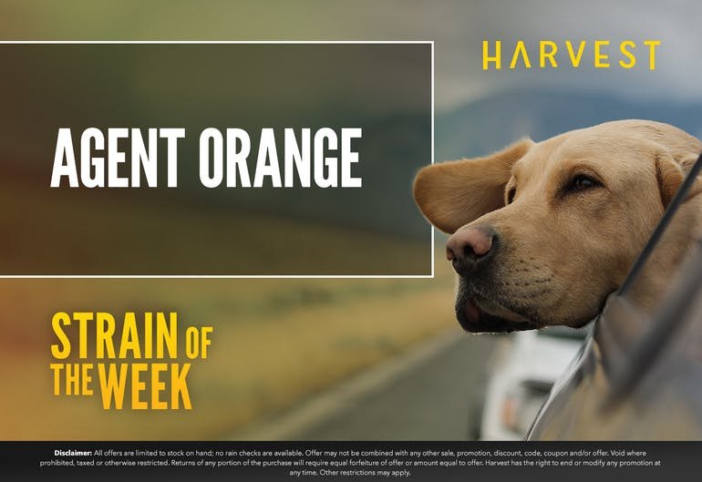 Harvest of Rockville Strain of the Week: Agent Orange
