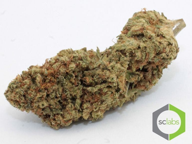 The Easy Choice - Downtown Long Beach Free 7gs with Any Delivery!