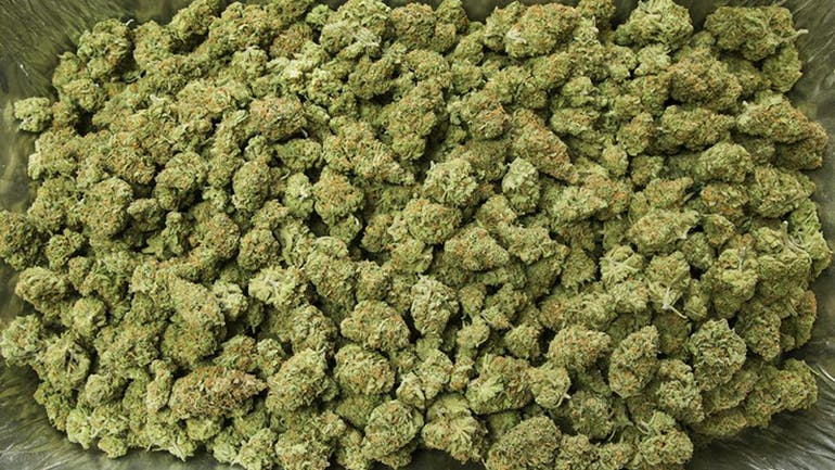 Tasty Farms Delivery - North Hollywood HALF OZ FOR $90 !! ANY STRAIN !!