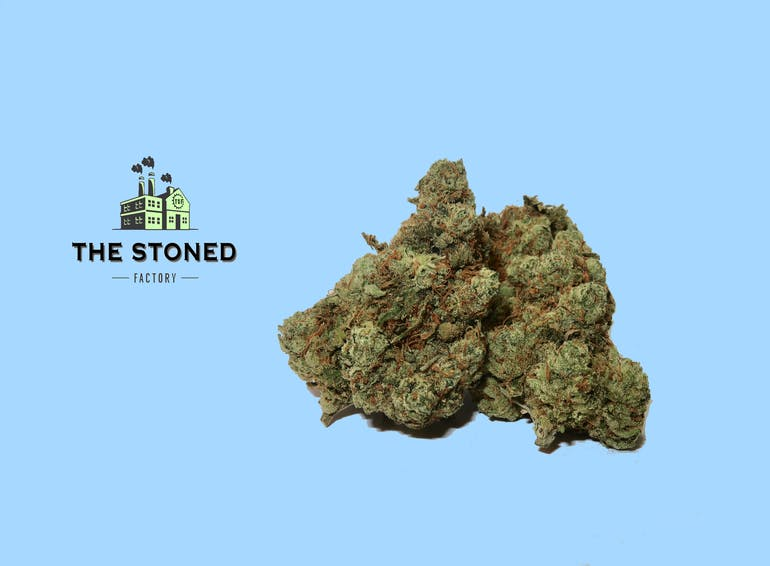 The Stoned Factory HEADCHEESE KUSH 7G. FOR $45
