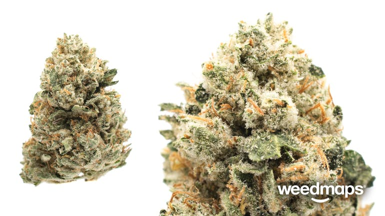 wedding cake strain weedmaps doctors orders stem pueblo co reviews menu 25760