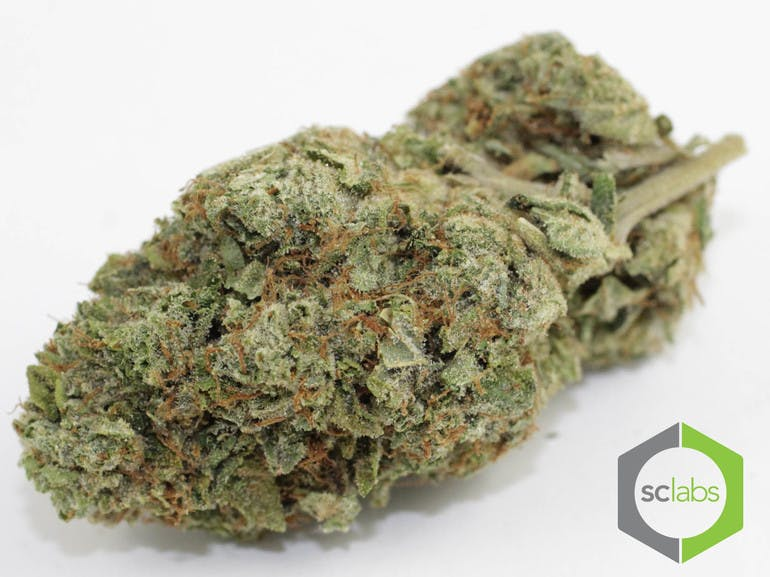 Ftp deals weed : Discount coupon for mulefactory