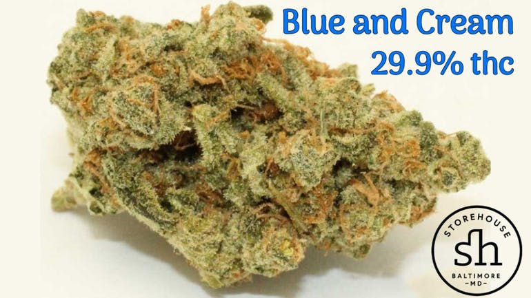 Storehouse Blue & Cream - $35/8th!