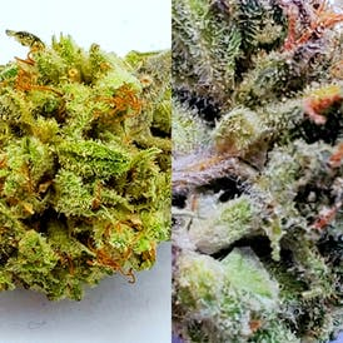 Flower - Orange Herijuana 110