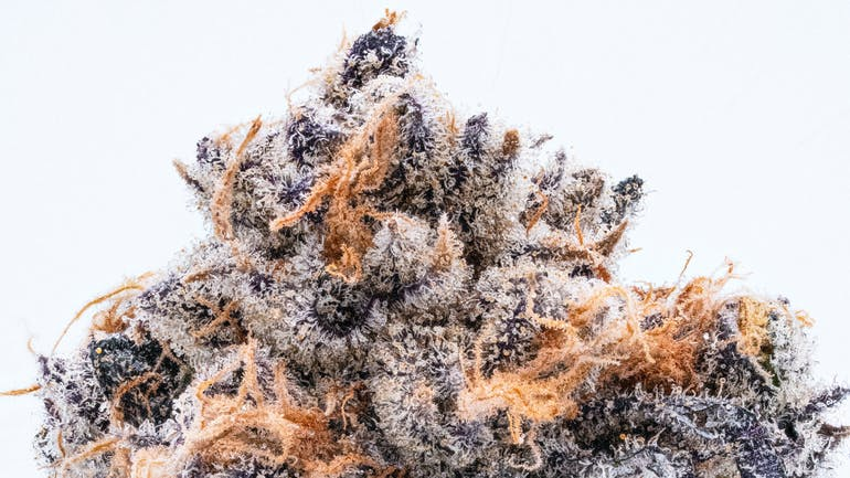 Northstar Holistic Collective 20% OFF ALL NORTH COUNTRY PHARM