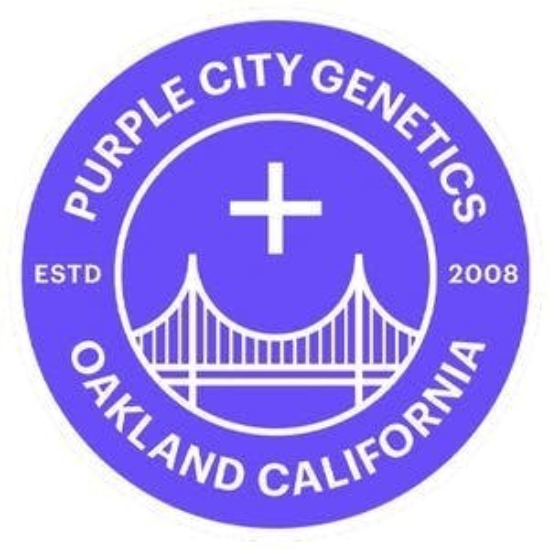 Purple City Genetics FEM Seeds - Champagne Mango 6pk