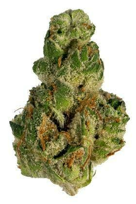 Flower - Joint Supply - GMO