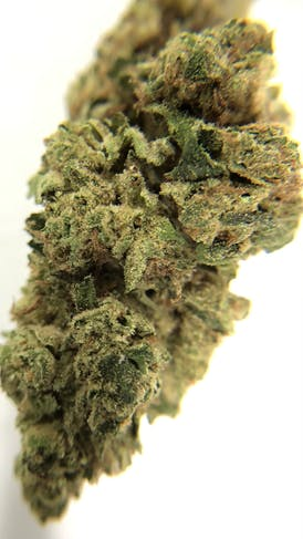 Girl Scout Cookies OTD