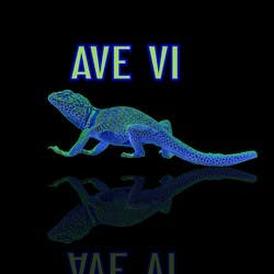 AVE 6